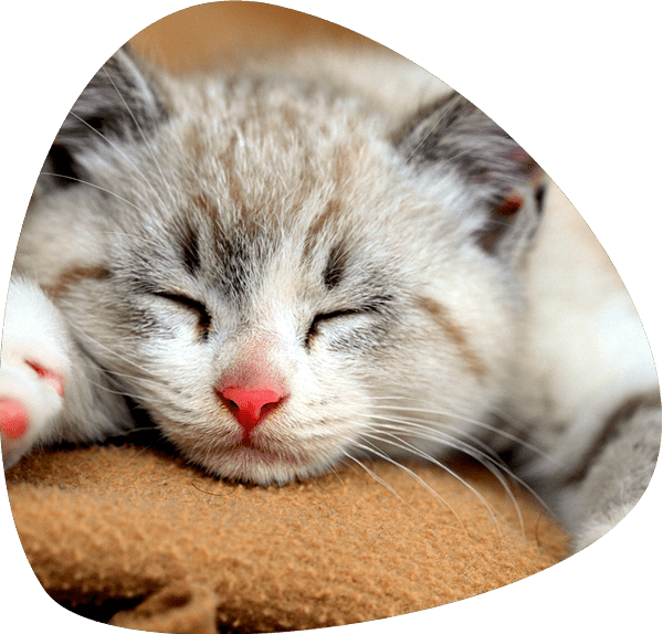 ADMINISTERING SUBCUTANEOUS FLUIDS TO YOUR CAT ⋆ Pebble